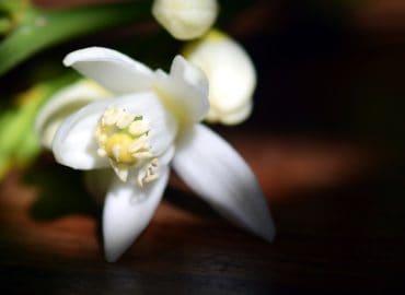 blossom-2245518-small-11019