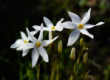 four_flower