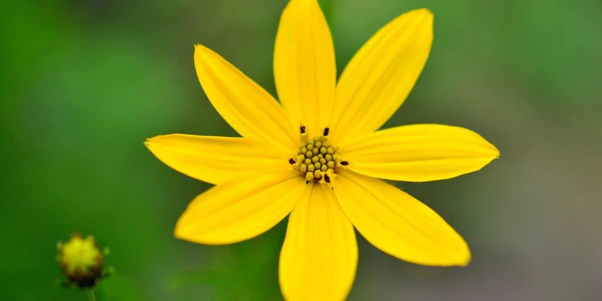 madchenauge_yellow