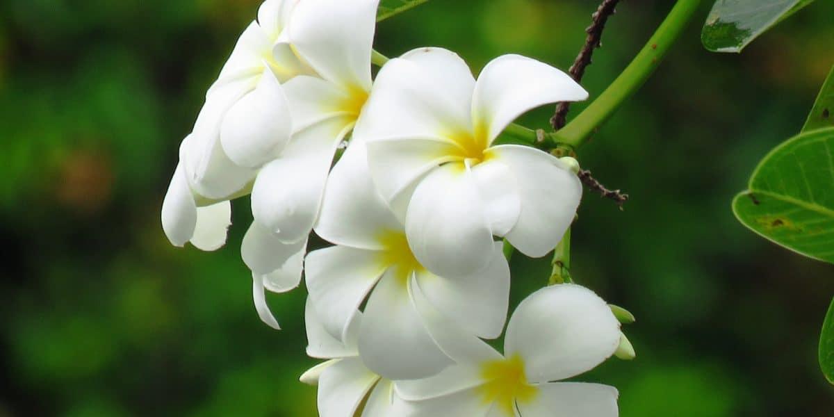 tree_flower