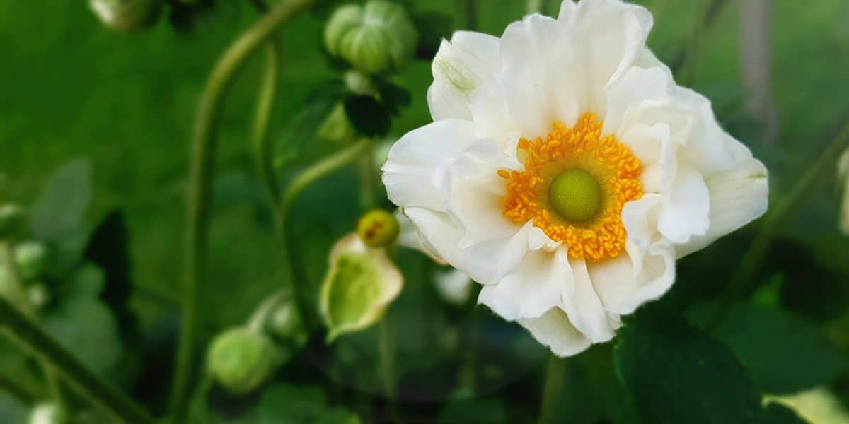 white_yellow_flower