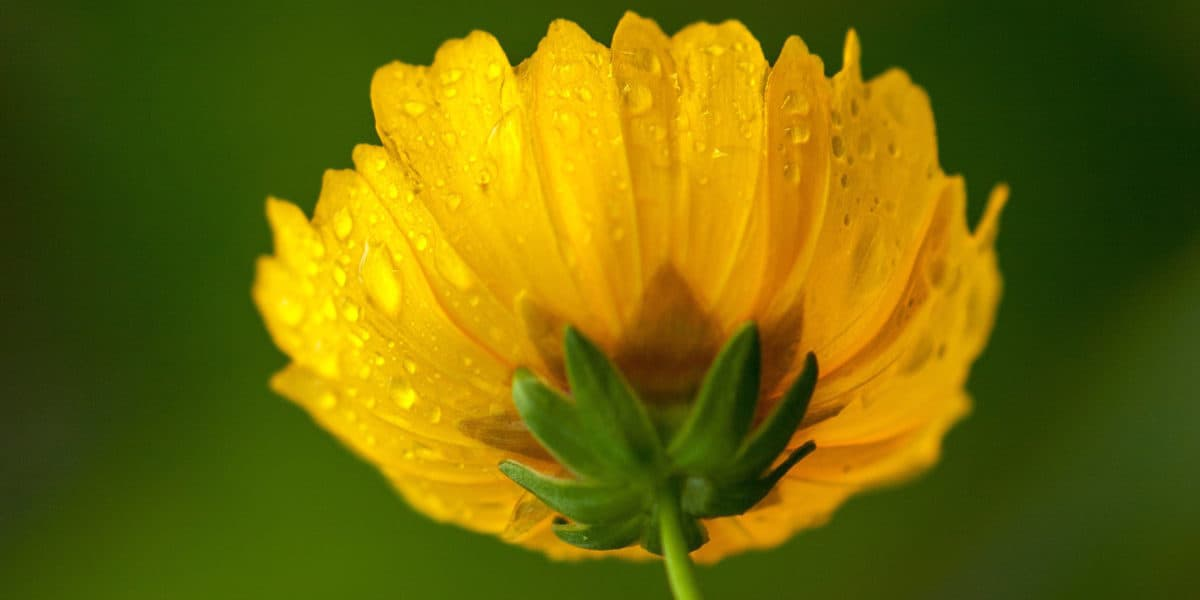 yellow_flower_square